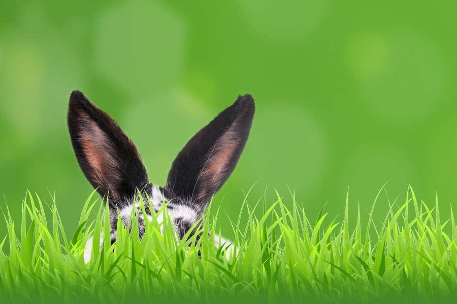 Frohe Ostern! Bleiben Sie gesund und machen Sie das Beste daraus.